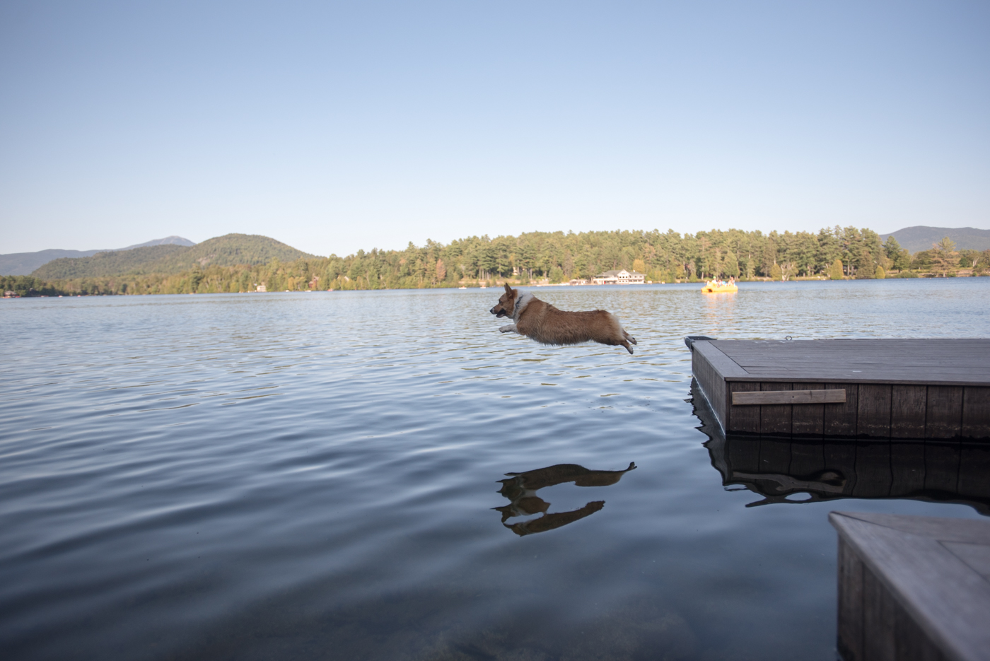 dog jumping off a dock